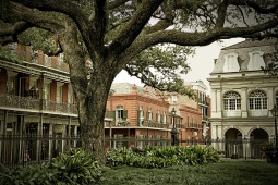 New-Orleans-Mini-Header